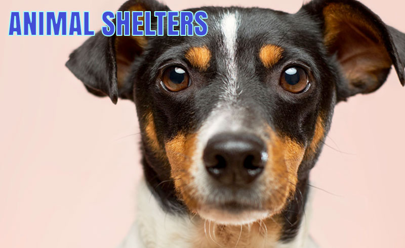 The Burlington County Animal Shelter