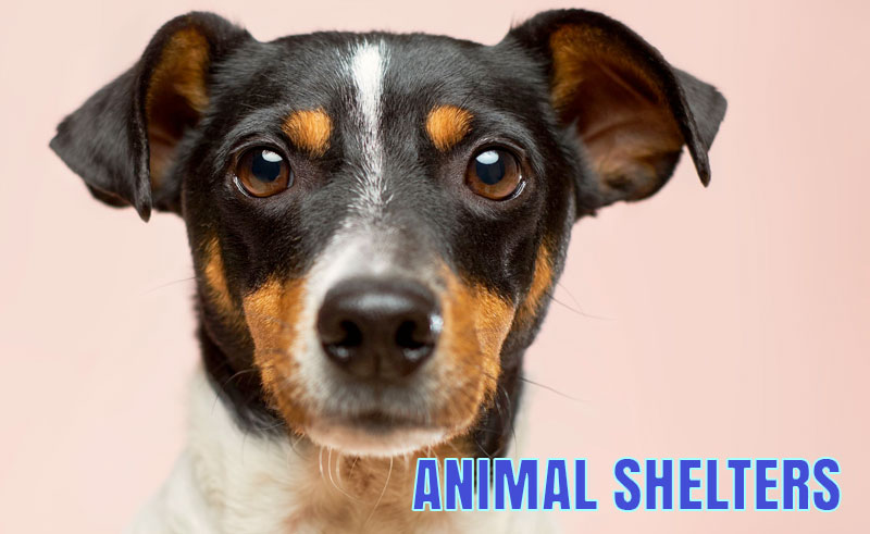 Cobb County Animal Shelter