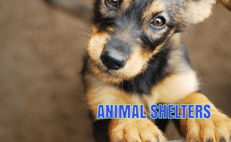 The Gwinnett County Animal shelter