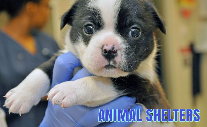 The Idaho Falls Animal Shelter