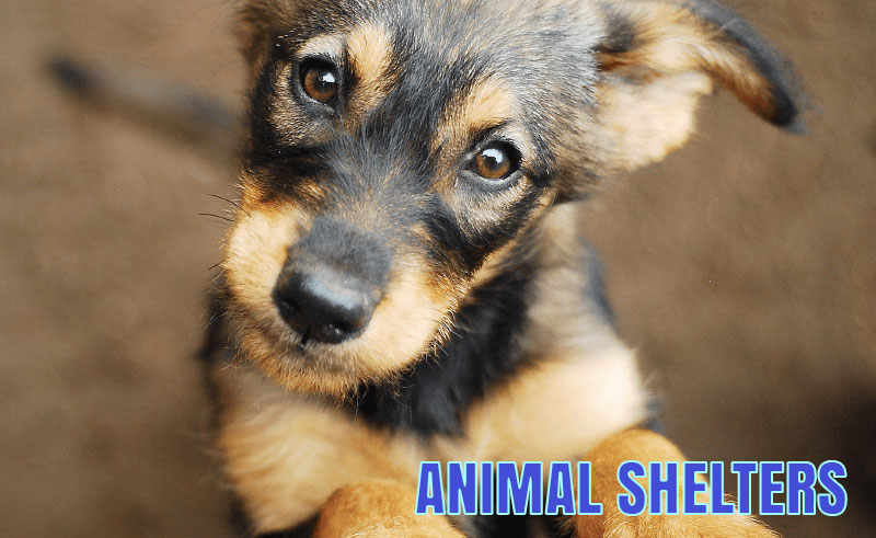 The Kenton County Animal Shelter
