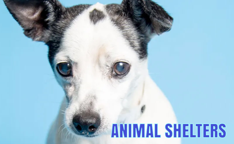 Marion County Animal Shelter