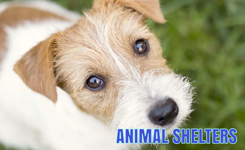 Moreno Valley Animal Shelter