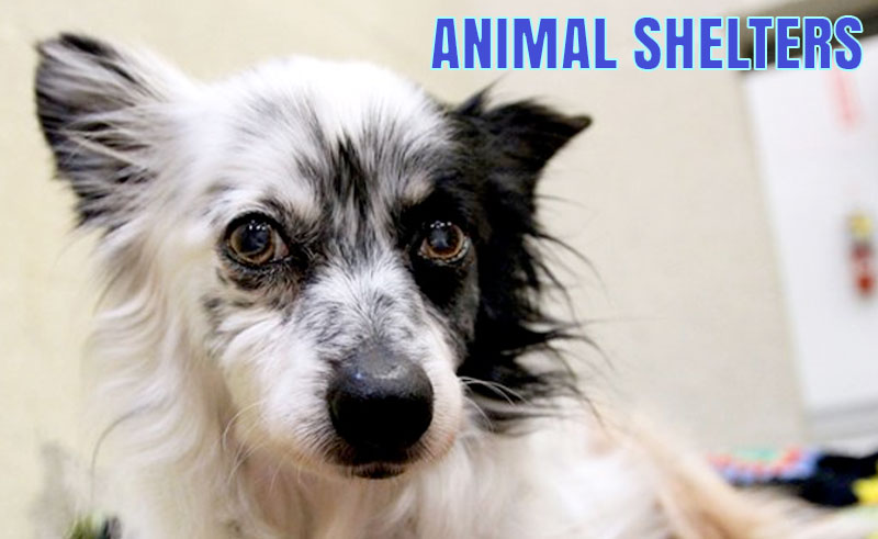 The Northeast Animal Shelter