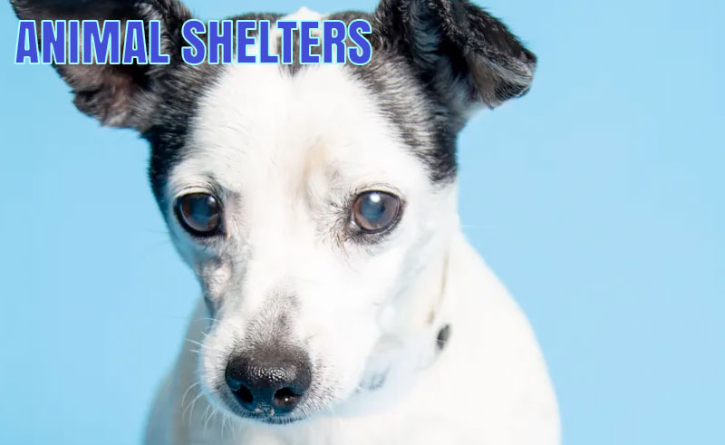 Orange County Animal Shelter