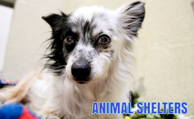 The Porter County Animal Shelter