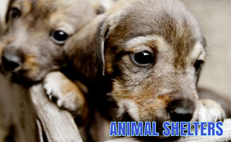 The Rochester County Animal Shelter