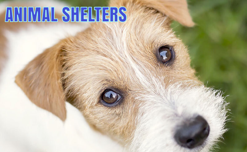 Weber County Animal Shelter