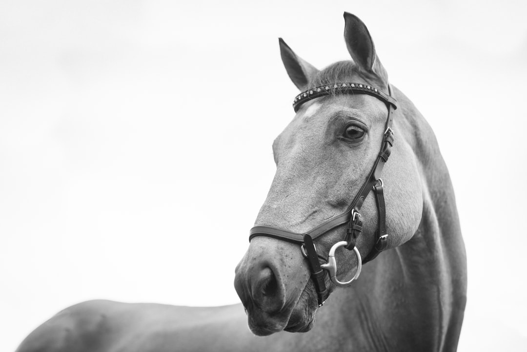 Taking Care Of Your American Horses